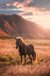 The horse in the golden light