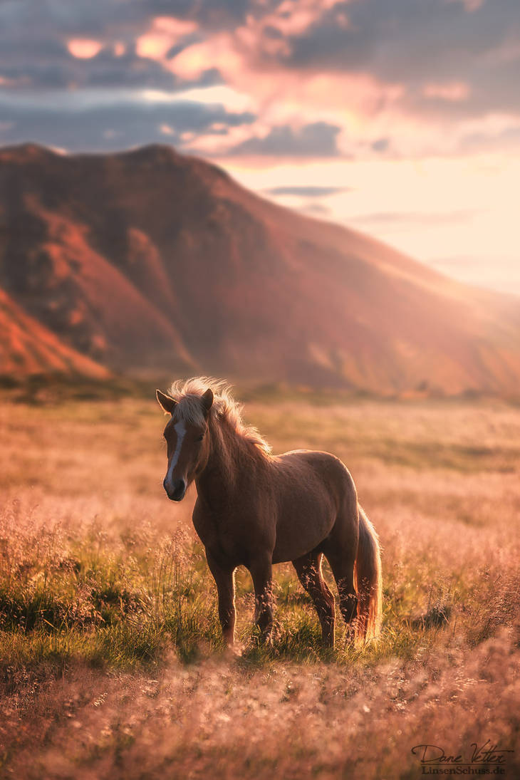 The horse in the golden light by LinsenSchuss