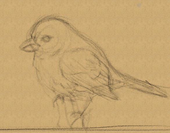 Blue Bird Sketch by Ronin-kin