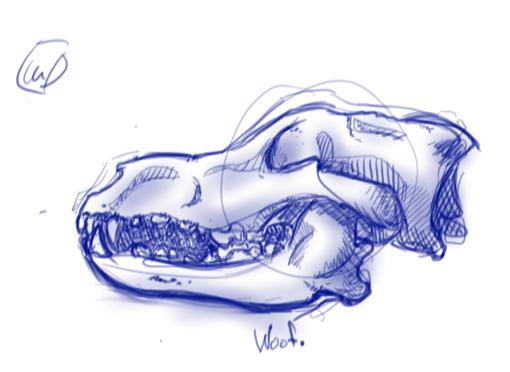 Wolf Skull 7/17/15 by Ronin-kin
