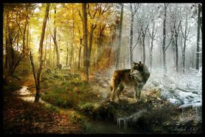 The Last Amazing Grays by Iribel