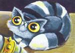 M.A.D cat funny cat