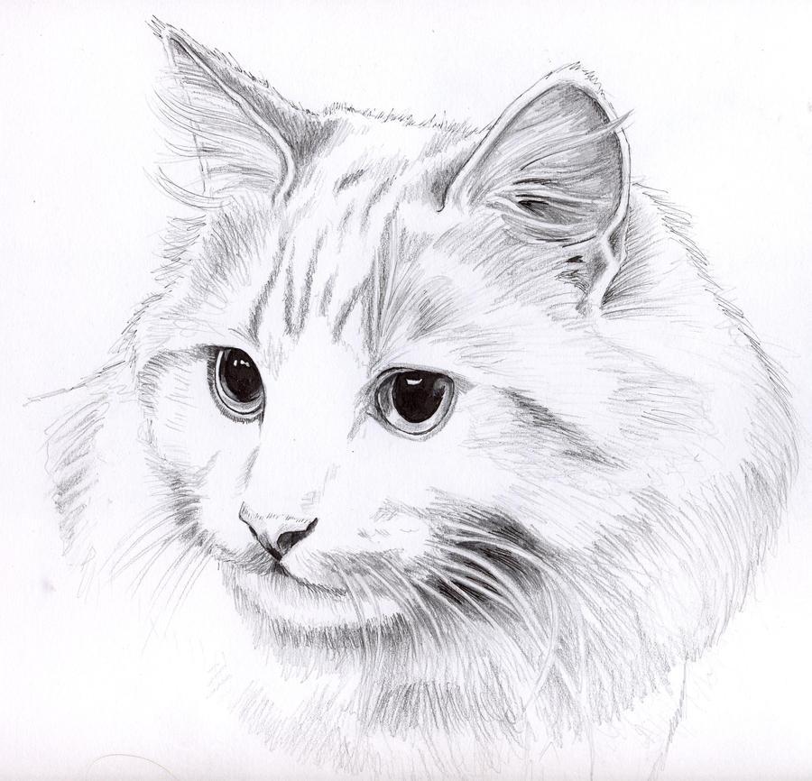 Pencil Drawings: Pencil Drawings Of Cats