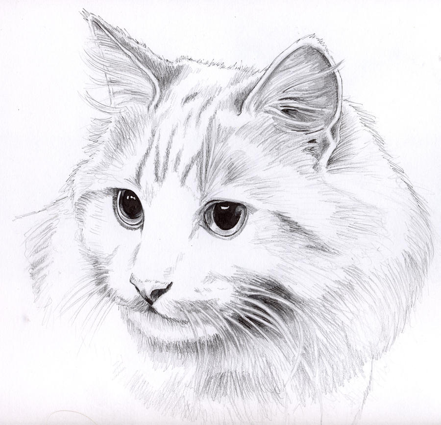 Pencil cat portrait by KingZoidLord on DeviantArt Tabby Cat Cartoon Drawing