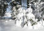 Winter Wonderland by Escara40