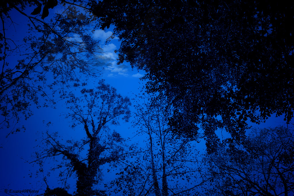 Blue Night by Escara40