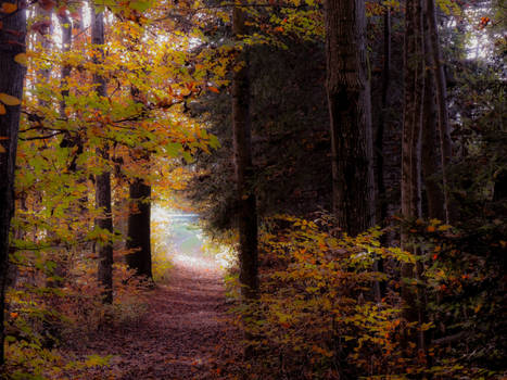 Indian Summer in my Forest