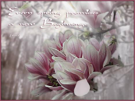 Magnolia Promises