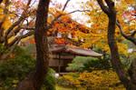 Ginkakuji in Autumn