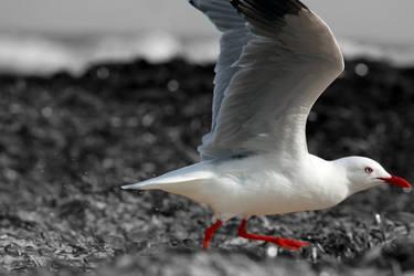 Take off by MaedayART