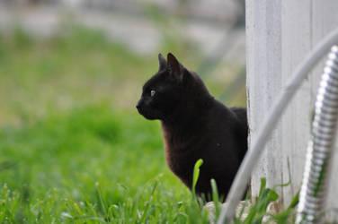 black cat by Tulla-Morwen