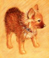 Puppy loke by w176