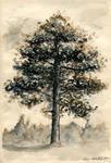Grandmas pine
