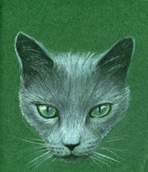 Green cat by w176