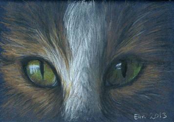 Cat eyes by w176