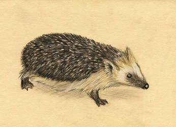 Lunchbrake hedgehog by w176