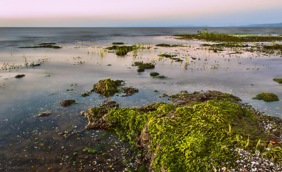 Wetlands by KanutoX