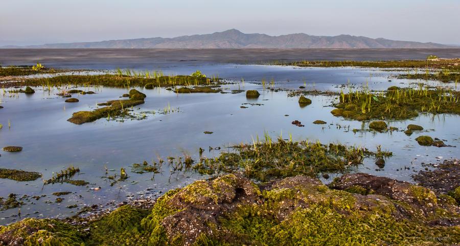 Wetlands 2 by KanutoX