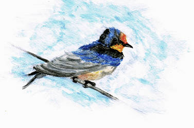aquarel bird drawing by Dalin98Zero