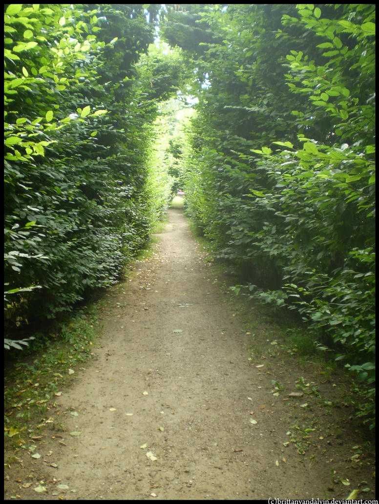 Path Between The Trees By Brittanyandalvin On Deviantart