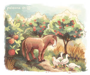 country apples