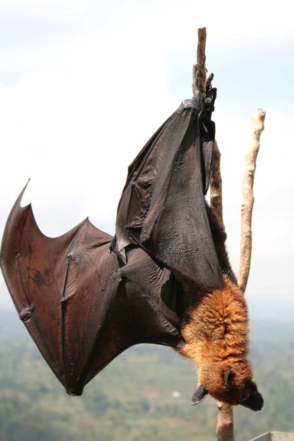 Bat bat bat by SiCoklat