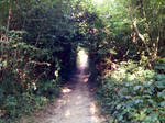 Enter the enchanted forest - Sunny peaceful summer