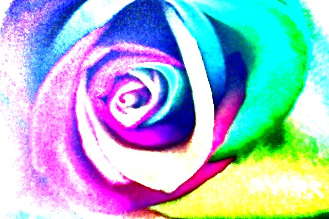 R A i N B O W . R O S E~4 by RainbowAurora