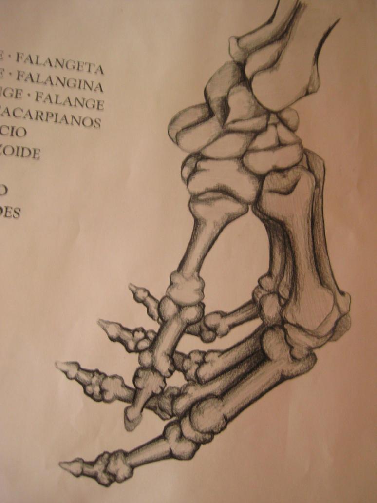 Hand Bone Anatomy 2 by sara-tre3 on DeviantArt