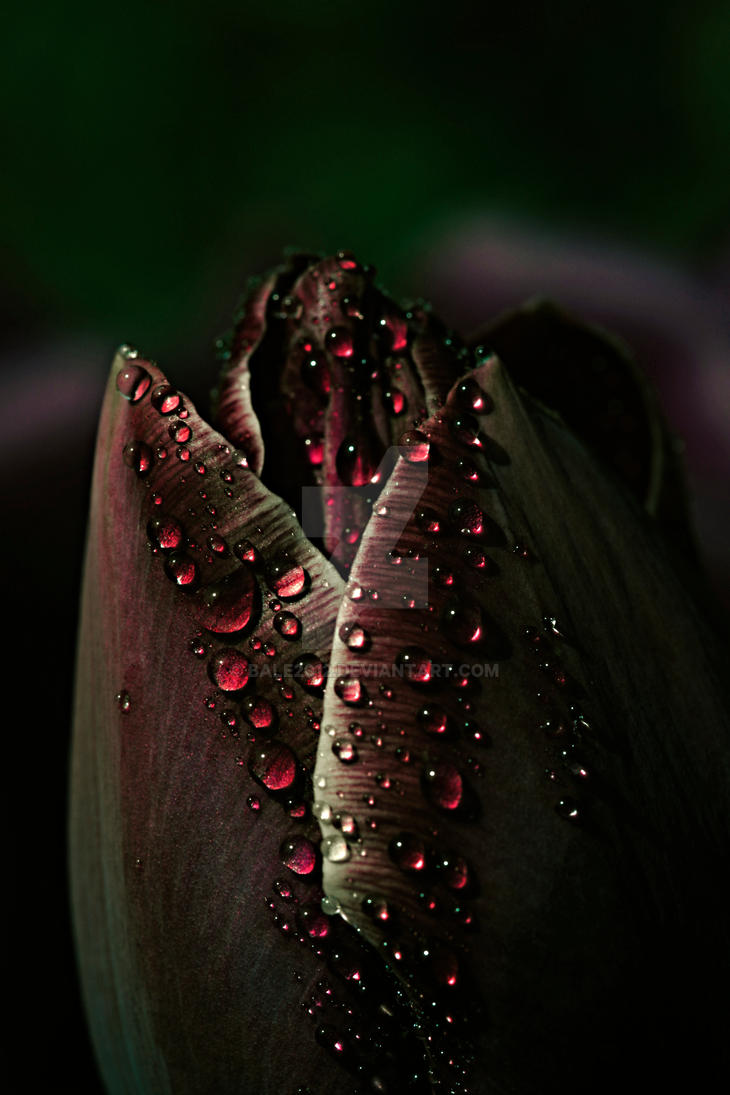 Dew to you..... by bale2012