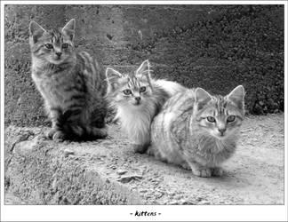 Kittens by tmiljan
