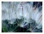 Flower dreams......