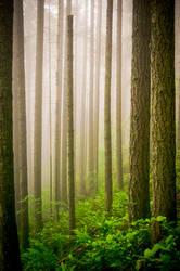 Mystery Mist by KsenKAT