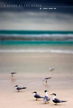 A Scene At The Beach