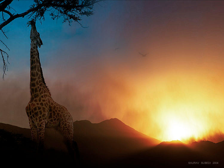 Wild Africa by Saurav