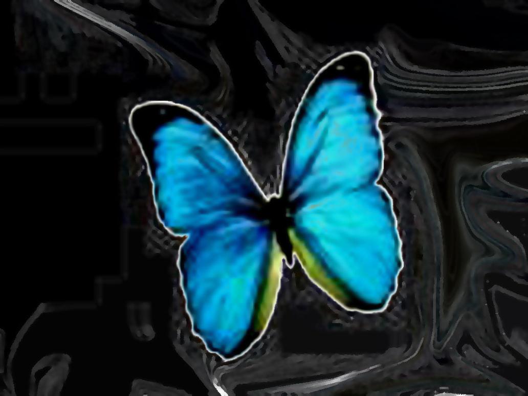 http://th05.deviantart.net/images3/PRE/i/2004/103/1/9/Papillon.jpg