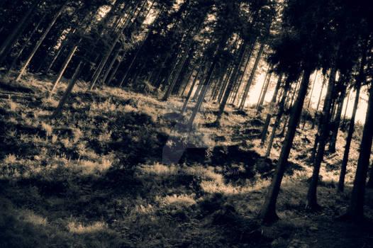 Deep forest of Beskid