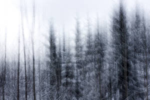 Winter forest abstraction
