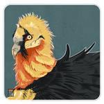 Bearded Vulture