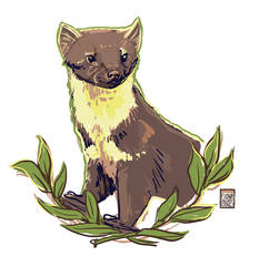 Pine Martin - Sketch by FionaCreates
