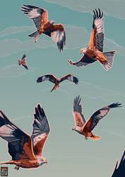 Red Kites by FionaCreates