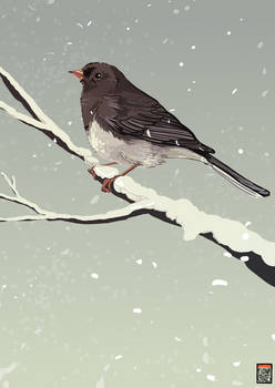 Junco - for Phoneix1785