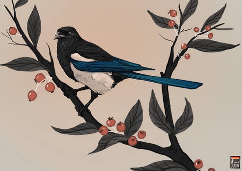 Magpie for themothworks