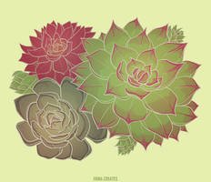 Succulent by FionaCreates