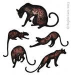 Lotsa Leopards