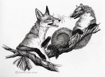 Inktober the 2nd - Fox and Pine marten by MO-ffie