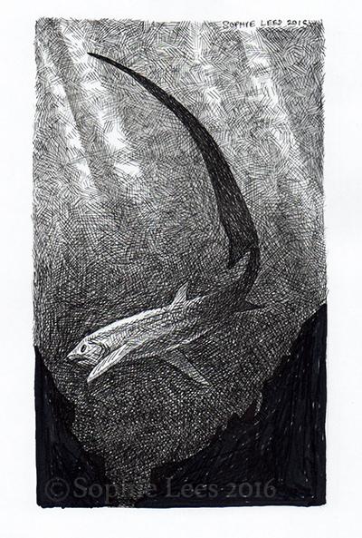 Thresher Shark by MO-ffie