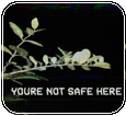 [f2u] Youre Not Safe Here by LoudlyTransparent