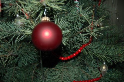 Christmas Cheer... by yrp