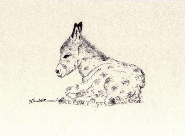 Baby Donkey Sketch by EllaBaras